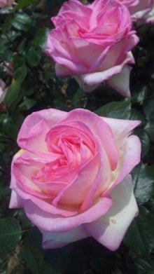AHN MIKA オフィシャルブログ『Jewel of Lotus』Powered by Ameba-110514_143715.jpg