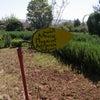 Jardin Bio-aromatique(ネクタロームの庭園)への画像