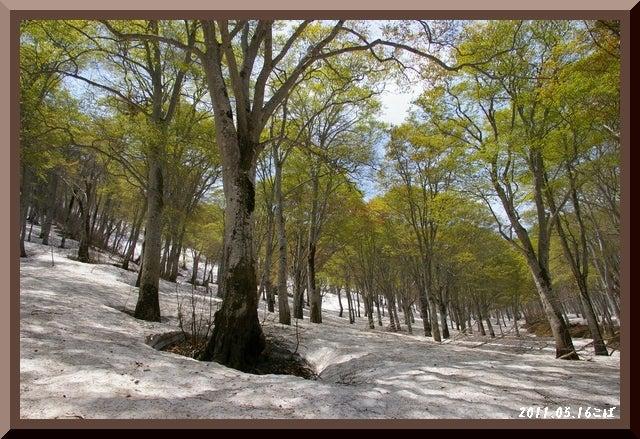 ロフトで綴る山と山スキー-0516_1138
