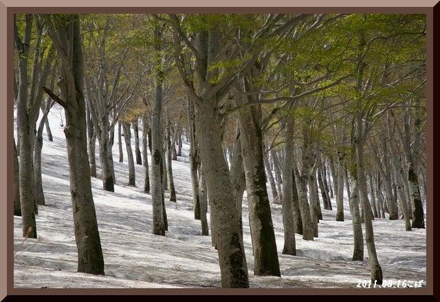 ロフトで綴る山と山スキー-0516_1140