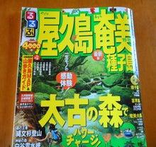 屋久島焼 陶工房 恋泊(こいどまり)ちゃんの 陶芸・ガーデニング日記!!!