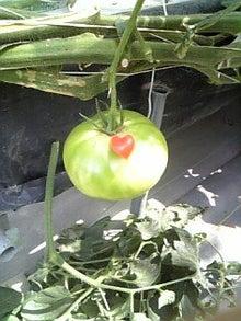 淡路島から。 イングランドの丘のブログ♪-ハートトマト