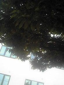 ㈲山下植物園のブログ-110520_1034~01.JPG