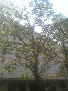 ㈲山下植物園のブログ-110514_1303~01.JPG