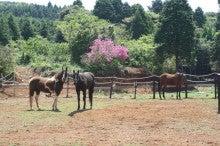 馬を愛する男のブログ Ebosikogen Horse Park-3頭、初そろい
