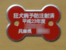 コーギー幸太のお散歩日記-2011052102鑑札