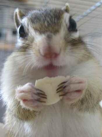 シマリスひまくるとポカポカ☆ひなたぼっこ日記-トトロみたいなぴなた♪