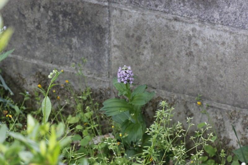 yosiのブログ