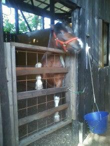 馬を愛する男のブログ Ebosikogen Horse Park-馬もおだてりゃ