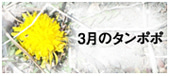Chageオフィシャルブログ「ManyManyHappyReturns」 Powered by Ameba-タンポポ