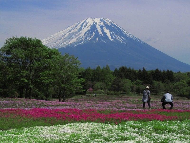 富士芝桜まつり2011開花状況まばらで入園料無料情報の写真富士山画像