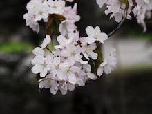 三和石材のブログ-sakura2011_02