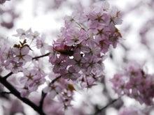 三和石材のブログ-sakura2011_03