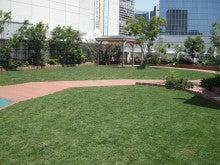 地域にひろがる「まちなか」の校庭芝生たち!-川崎アトレ芝生アップ