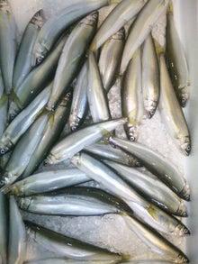 お魚スタッフのブログ