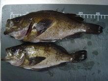 No Fishing No Life in niigata