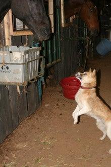 馬を愛する男のブログ Ebosikogen Horse Park-アーサーとケンちゃん