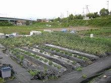 耕作放棄地をショベル1本で畑に開拓!週2日で10時間の野菜栽培の記録 byウッチー-110530今日の出来栄え05