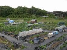 耕作放棄地をショベル1本で畑に開拓!週2日で10時間の野菜栽培の記録 byウッチー-110530今日の出来栄え07