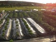 耕作放棄地をショベル1本で畑に開拓!週2日で10時間の野菜栽培の記録 byウッチー-110530今日の出来栄え10