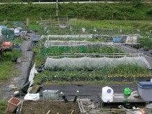 耕作放棄地をショベル1本で畑に開拓!週2日で10時間の野菜栽培の記録 byウッチー-110530今日の出来栄え01