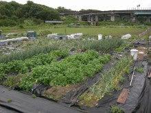 耕作放棄地をショベル1本で畑に開拓!週2日で10時間の野菜栽培の記録 byウッチー-110530今日の出来栄え06