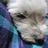 愛犬「みかん」の画像