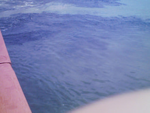 小笠原エコツアー 小笠原エコツーリズム  小笠原旅行 小笠原観光 小笠原の情報と自然を紹介します-20110531101629.jpg