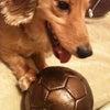 サッカー。の画像