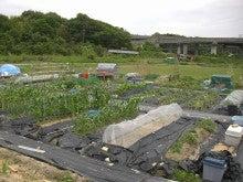 耕作放棄地をショベル1本で畑に開拓!週2日で10時間の野菜栽培の記録 byウッチー-110531今日の出来栄え03