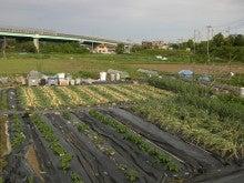 耕作放棄地をショベル1本で畑に開拓!週2日で10時間の野菜栽培の記録 byウッチー-110531今日の出来栄え01