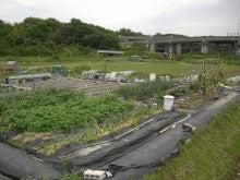 耕作放棄地をショベル1本で畑に開拓!週2日で10時間の野菜栽培の記録 byウッチー-110531今日の出来栄え04