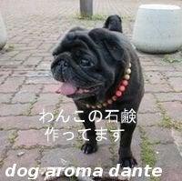 dog aroma dante 社長のブログ