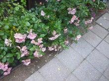 HAPPY  RECONNECTION ☆こころに咲く薔薇
