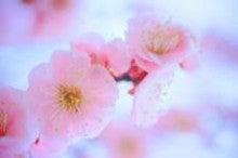 ひまわり ‐日本を愛する‐-ファイル0044.jpg