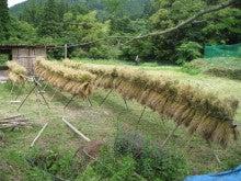 農トレ in 棚田【農業を好きになろう】-掛け干し