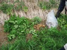 農トレ in 棚田【農業を好きになろう】-ポテト収穫