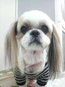 LOOP'S☆十犬十色-2011052915090003.jpg
