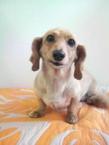 LOOP'S☆十犬十色-2011052911560001.jpg