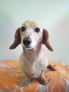 LOOP'S☆十犬十色-2011052911040000.jpg