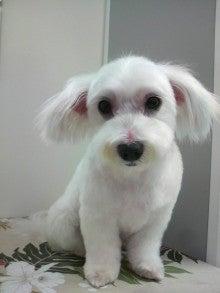 LOOP'S☆十犬十色-2011052814400001.jpg