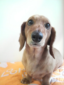 LOOP'S☆十犬十色-2011052912590001.jpg