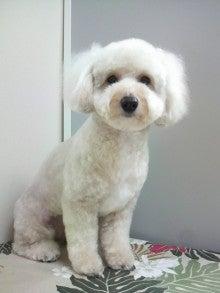 LOOP'S☆十犬十色-2011052817440002.jpg