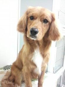 LOOP'S☆十犬十色-2011052819030000.jpg