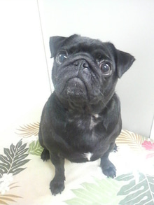LOOP'S☆十犬十色-2011060517260002.jpg