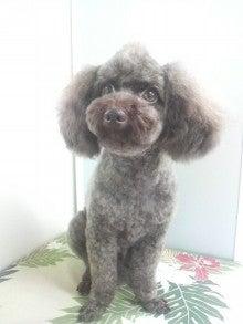 LOOP'S☆十犬十色-2011060412110000.jpg