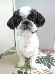 LOOP'S☆十犬十色-P1000355.jpg