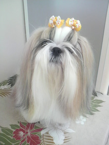 LOOP'S☆十犬十色-2011060614430001.jpg