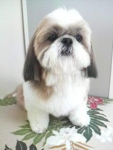 LOOP'S☆十犬十色-P1000359.jpg