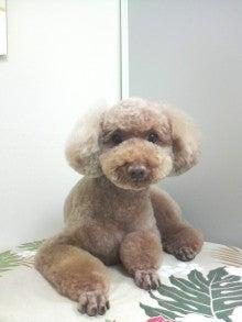 LOOP'S☆十犬十色-2011053118320003.jpg